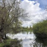 Coronavirus tips: Take a walk at Madrona Marsh in Torrance