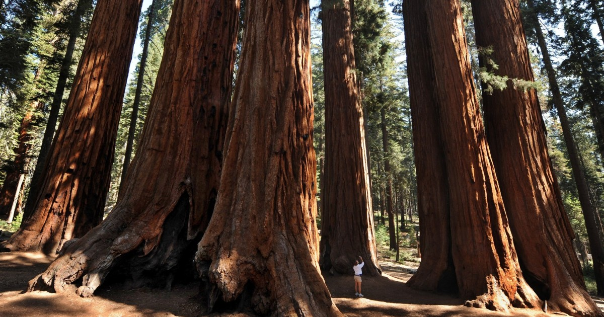 Sequoia & Kings Canyon to start reopening amid coronavirus